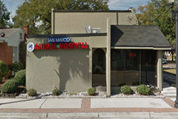 san marco animal hospital pet friendly jacksonville veterinarian